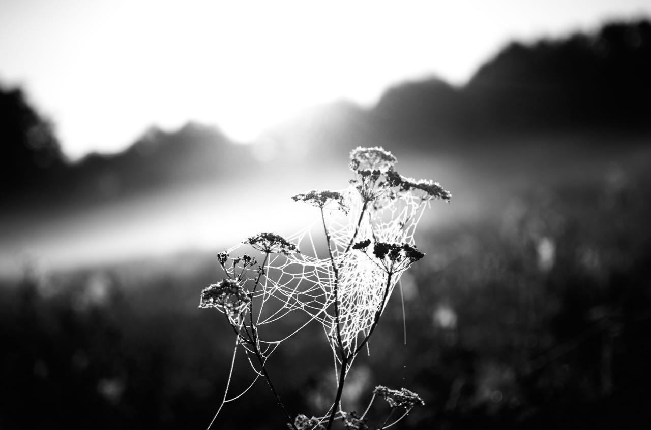 Herbstmorgen – Bilder S/W