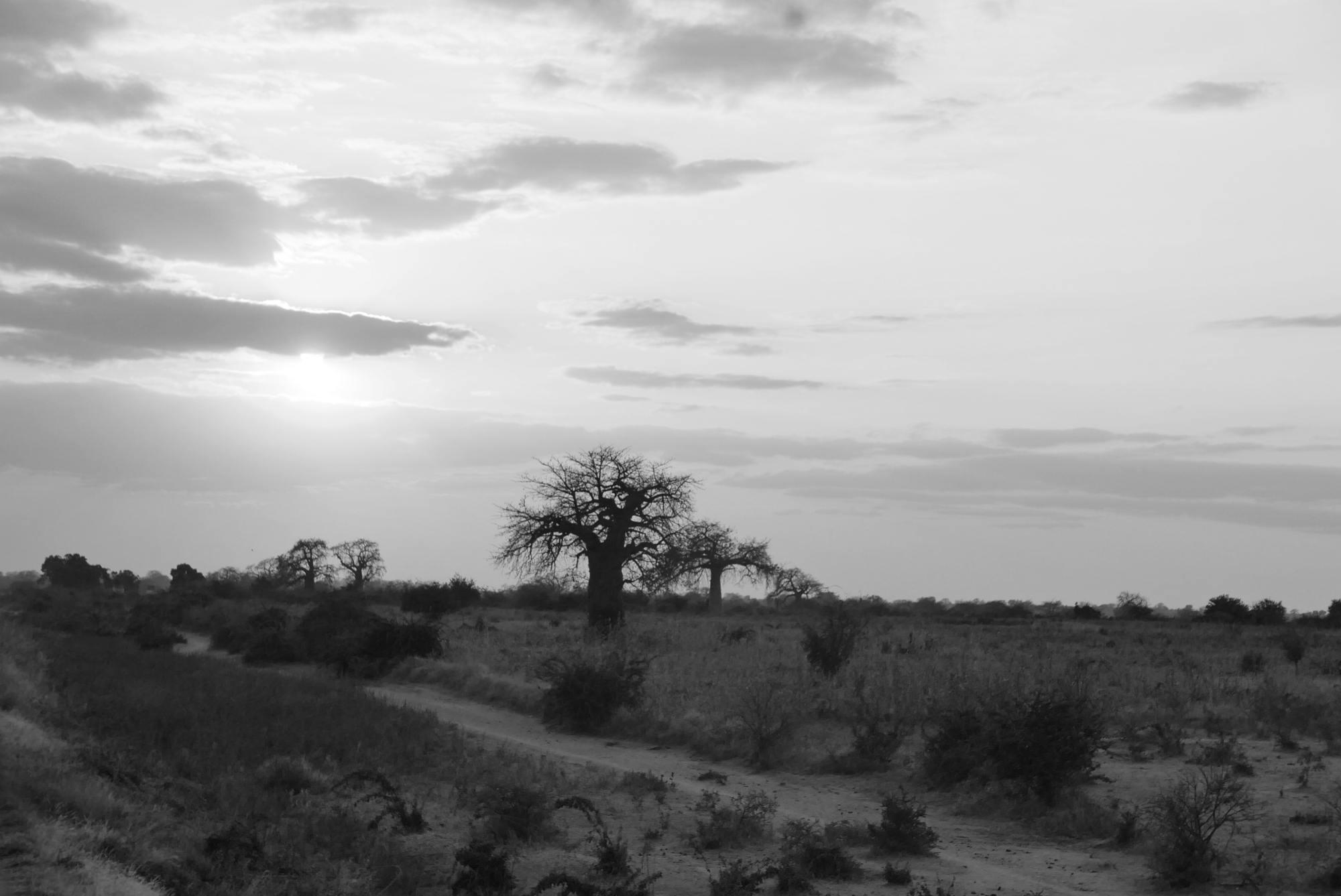 Landscape near Dodoma