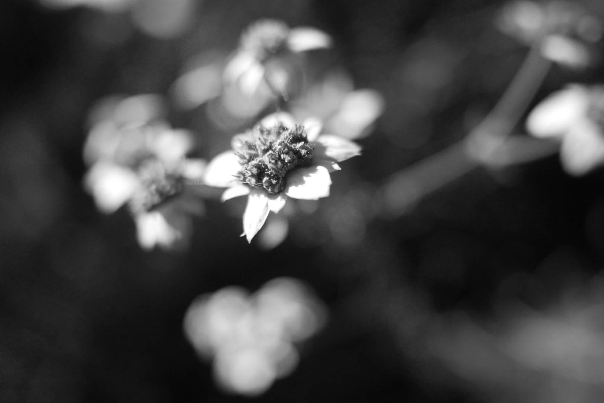 Flower, Mt. Hanang